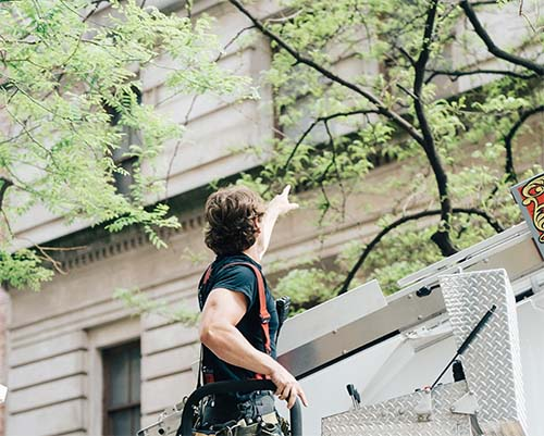 Man from Columbia trimming a tree