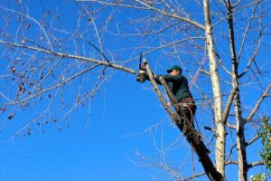 Principles of Tree Trimming